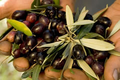 a handful of olives